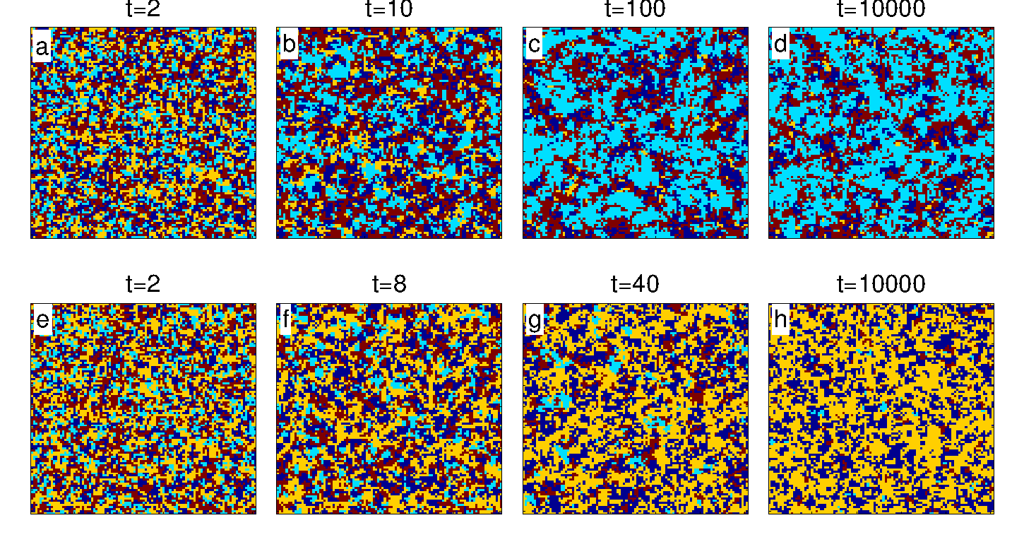Typical snapshots of the simulation grid for
