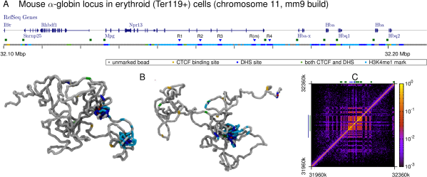 (A) Browser view showing genes in the vicinity of the