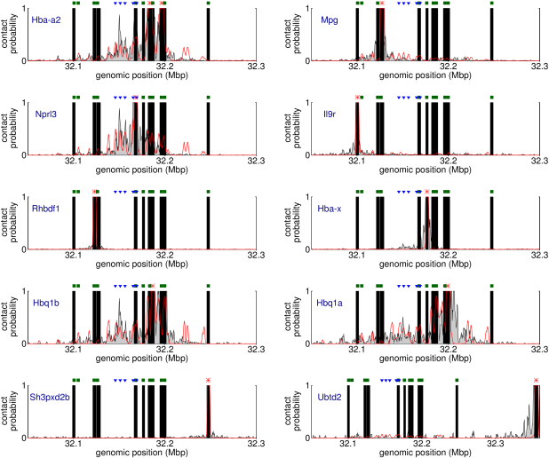 Plots showing results from the simulations described in Figures1-3 alongside data from Capture-C experiments. Capture-C results are from Ref.(14), and plots are shown for each capture probe from that data set; these are at the locations of all of the promoters within the region simulated. Red lines show simulation results, black shaded curves the experimental data, and black bars indicate regions where no experimental data is available. The experimental data are scaled as described in Additional file15: Supplementary Methods. The positions of the known regulatory elements and other promoters are indicated at the top of each plot with blue and green symbols respectively, and the red stars indicate the position of the Capture-C probe for each plot.
