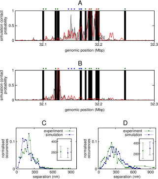 (A) Plot showing the contacts made with the promoters of the two