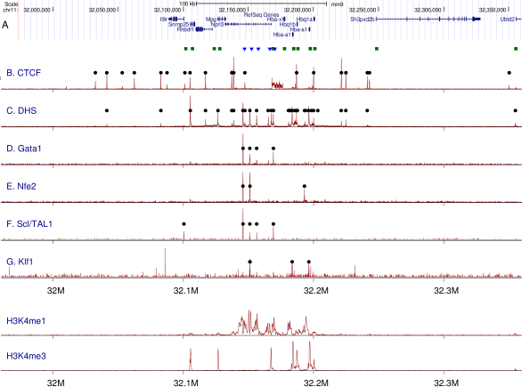 (A) Genome browser view of genes in a 400kbp region of mouse chromosome 11 surrounding the