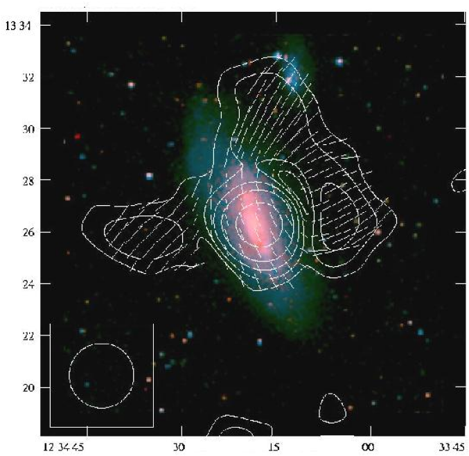 Polarized radio emission (contours) and B-vectors of the spiral galaxy NGC4569 in the Virgo Cluster, observed at 6cm wavelength with the Effelsberg telescope