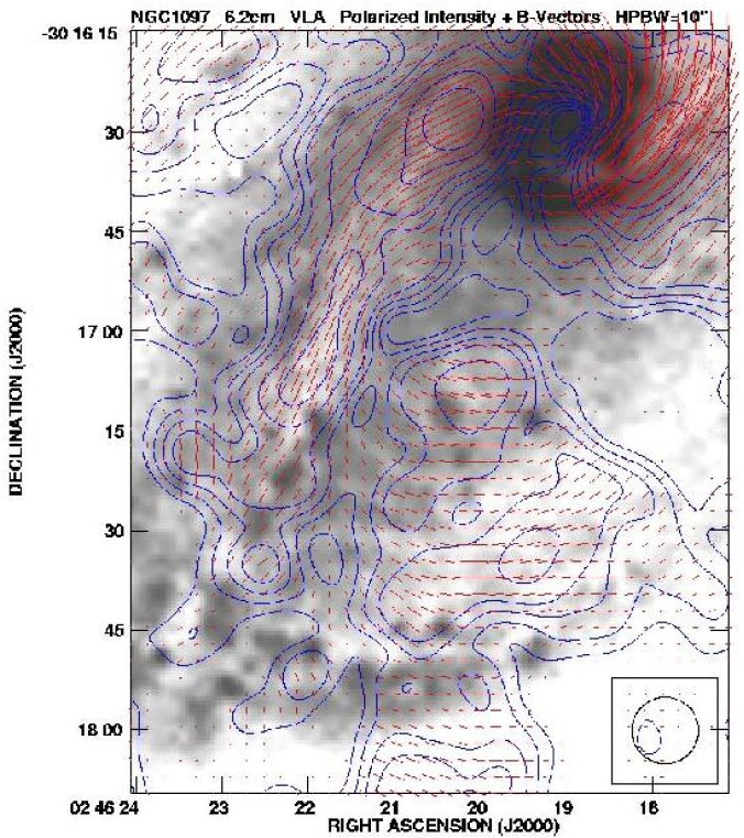 Polarized radio emission (contours) and