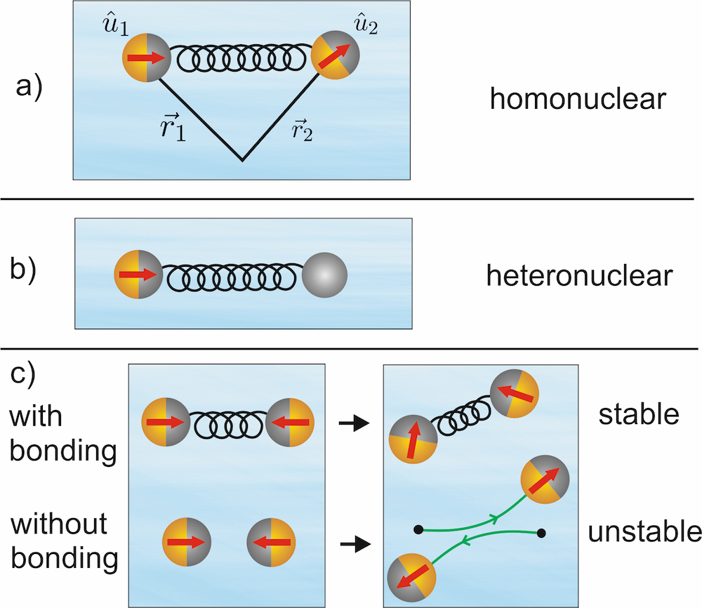 Simple models for an active colloidal molecule. a) Homonuclear active colloidal molecule composed of two identical self-propelled particles at central positions