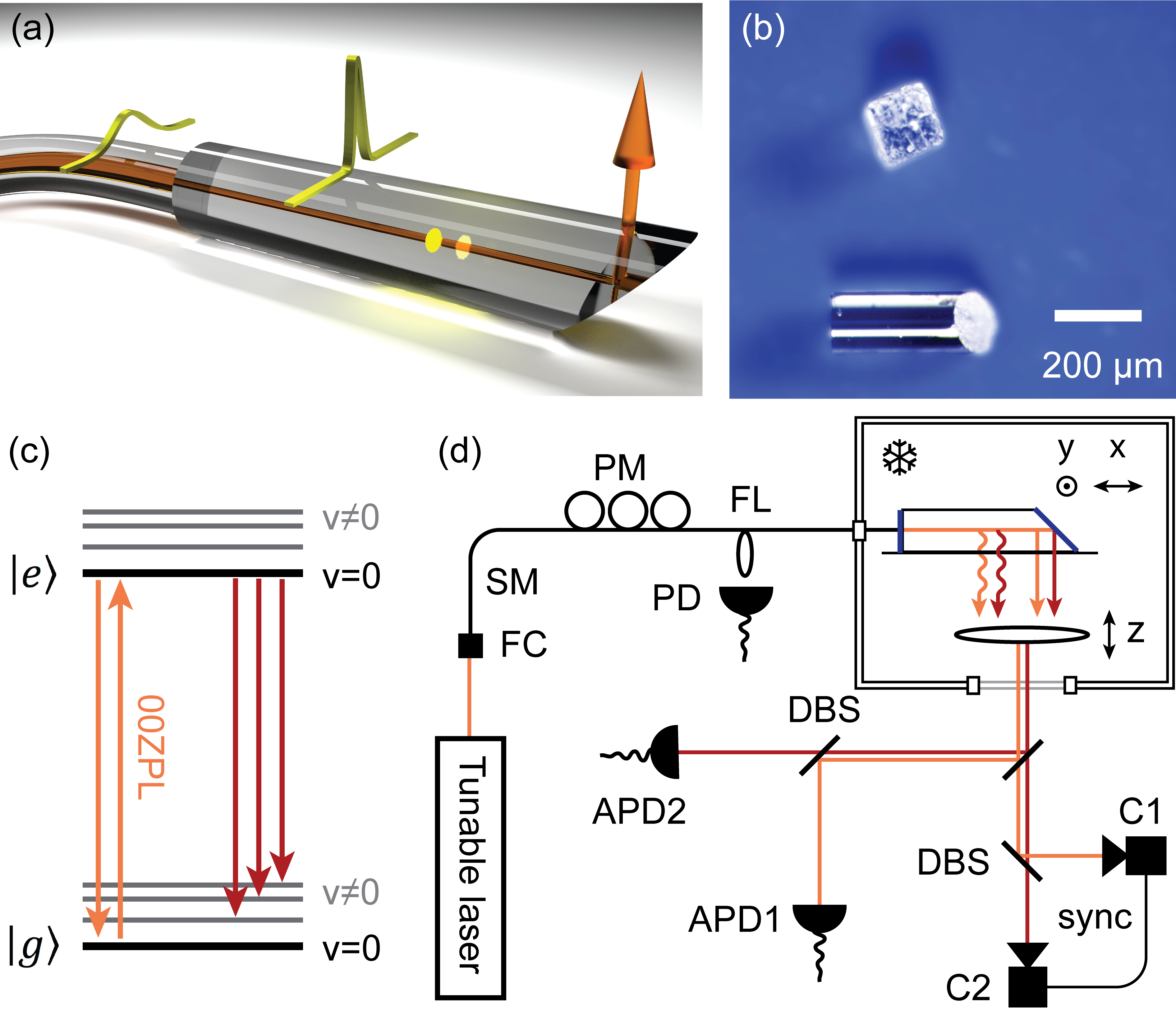 a) Schematics of a filled capillary butt-coupled to a single-mode optical fiber. b) A microscope image of an empty capillary next to a grain of table salt. c) Simplified Jablonski diagram of a DBT molecule. d) Sketch of the experimental arrangement. A CW Ti:Sapph laser is coupled to a single-mode fiber that enters a helium bath cryostat, ending with the nanocapillary. An aspheric lens provides optical access to the sample from a side window. Synchronized cameras C1 and C2 and avalanche photodiodes APD1 and APD2 are used for detection. PD: Photodiode; SM: single-mode fiber; DBS: dichromatic beam splitter; PM: fiber polarization management; FC: fiber coupler; FL: fiber leakage for intensity stabilization.