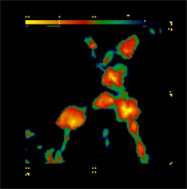 shows the spatial distribution of