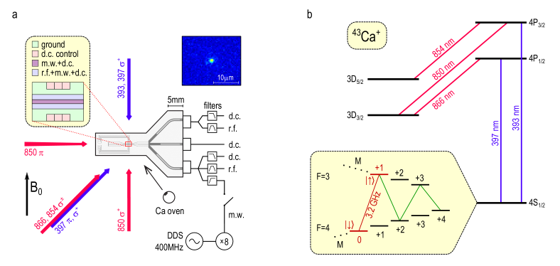 The ion trap and the qubit. (a) Schematic diagram of the surface ion trap, showing (left inset) central electrode layout. Microwave (m.w., 3.2