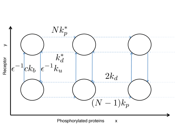 Schematic view of two chemical reactions implementing a sensing device as described in eq. (