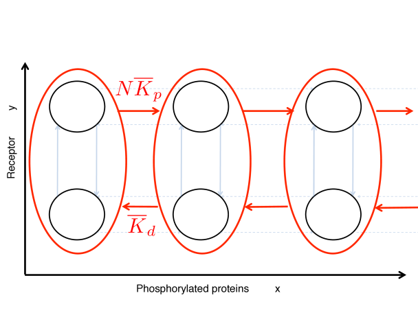Effective dynamics after the averaging over receptor states as described in eq. (