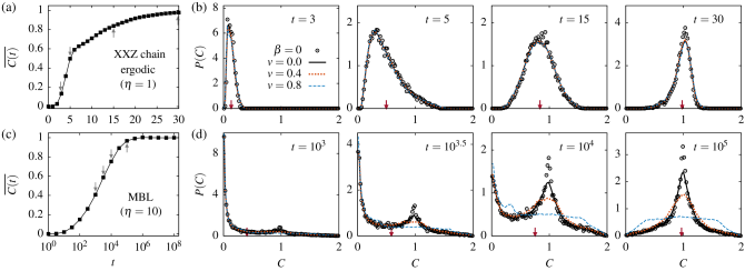 Probability distribution of the OTO commutator measured along the growth in the random-field Heisenberg XXZ chain. The disorder average