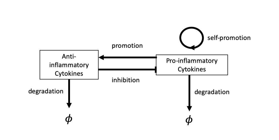 Schematic describing the chemicals and processes included in model described in