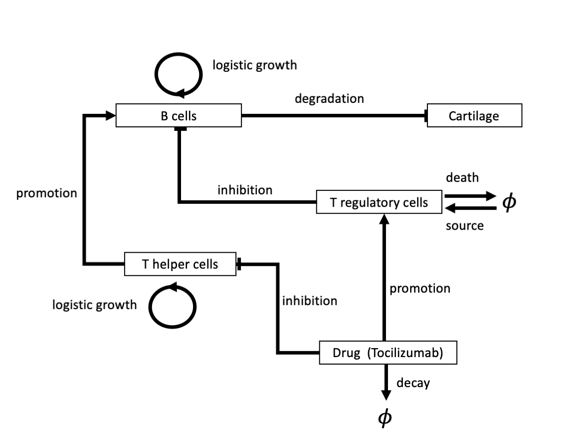 Schematic describing the chemicals, cells and processes included in model described in