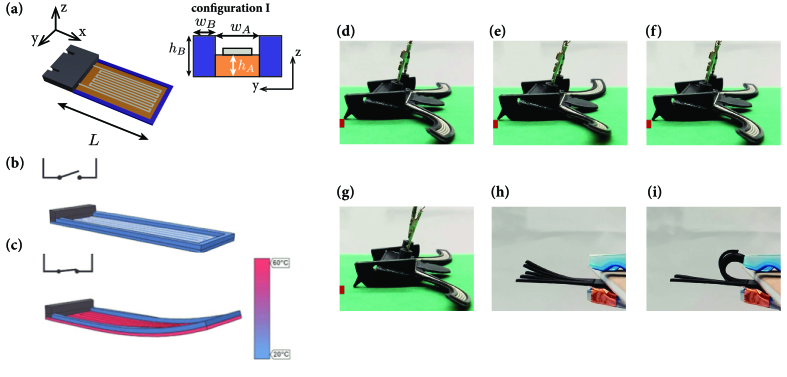 (a) Geometry of the base-rim structure and associated parameters; (b) Initial flat shape with cold base and cold rim; (c) Actuated curved shape with hot base and cold rim; (d) 3D printed turtle in the initial position with downward curved fins; (e) turtle with fins in actuation, upward position; (f) turtle at the end of the first actuation cycle; (g) turtle after 10 heating pulses; (h) Side view of a set of linear actuators arranged as fingers. (i) Strongly curved, plastically deformed fingers after strong actuation.