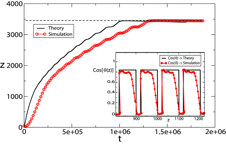 Time evolution of the front coordinate in the LB simulation (red points) and as numerical solution of Eq.(