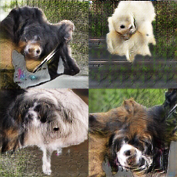 Samples generated from the ImageNet dataset.