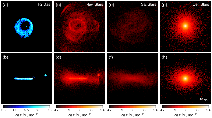 Surface densities of various particles types at the end of the simulation (