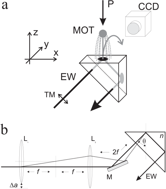 Evanescent-wave atom mirror. (a) Configuration in the rubidium vapor cell: magneto-optical trap (MOT), right-angle prism with refractive index
