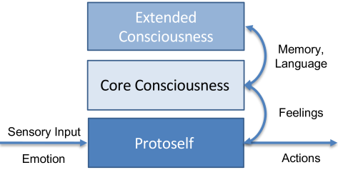 Simplified view of Damasio's model of consciousness: The protoself processes emotions and sensory input unconsciously. Core consciousness arises from the protoself which allows to put the itself into relation. Projections of emotions give rise to higher-order feelings. With access to memory and extended functions such as language processing the extended consciousness emerges.