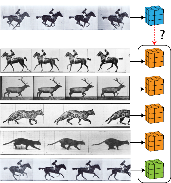 We first transform a sequence of frames from a video clip using a randomly generated view operator. This splits the sequence into multiple subsequences, which may overlap, and applies random data augmentation to each subsequence. We then process each subsequence independently using a spatio-temporal encoder to extract features representing different views of the data, which differ due to the random view operator and limited receptive fields in the encoder. We then maximize mutual information between the features from the various views.