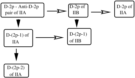 The relationship between different D-branes. The horizontal arrows represent the result of modding out the theory by