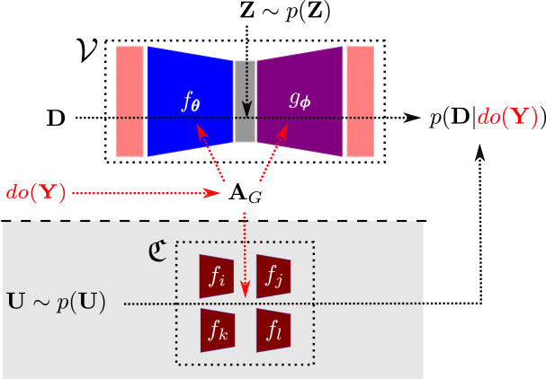 A schematic overview of the inference process within the neural-causal iVGAE